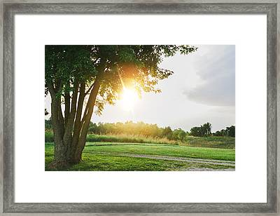 Sunset At Pearman Forest Framed Print