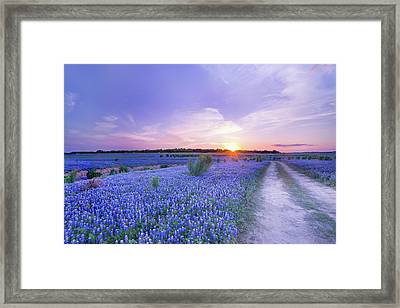 Sunset At The End Of Bluebonnet Field - Texas Framed Print