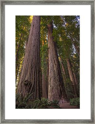 Sunset At The Grove Framed Print