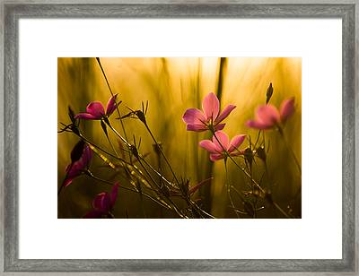 Sunset Beauties Framed Print