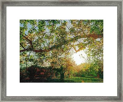 Framed Print featuring the photograph Sunset  by Bee-Bee Deigner
