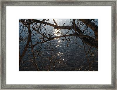 Sunset Between The Branches Framed Print by Karina Khan