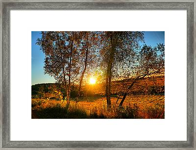 Sunset Between Two Birches Framed Print by Lilia D