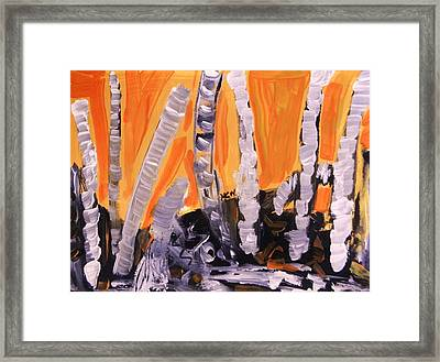 Sunset Birches Framed Print