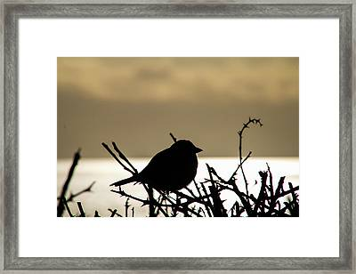 Sunset Bird Silhouette Framed Print