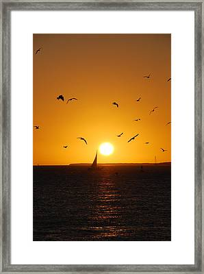 Sunset Birds Key West Framed Print by Susanne Van Hulst
