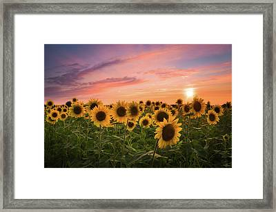 Sunset Choir Framed Print