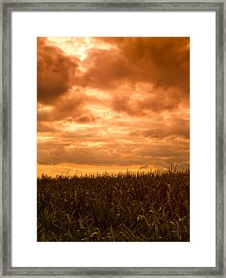 Sunset Corn Field Framed Print by Wim Lanclus
