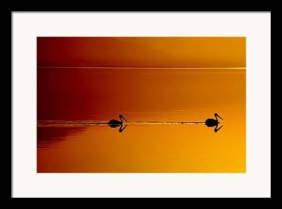 Salton Sea Framed Prints