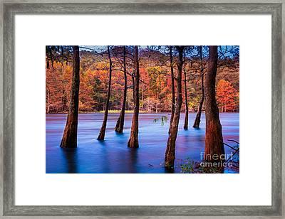 Sunset Cypresses Framed Print by Inge Johnsson