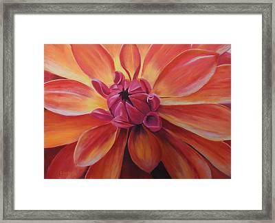 Sunset Dahlia Framed Print