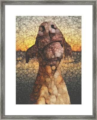 Sunset Dog Framed Print