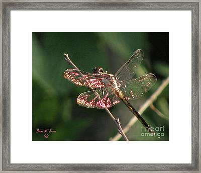 Framed Print featuring the photograph Sunset Dragonfly by Donna Brown