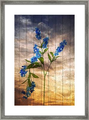 Sunset Dream Framed Print by Svetlana Sewell