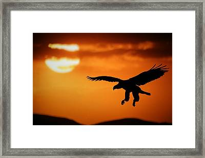 Sunset Eagle Framed Print