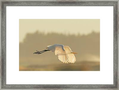 Sunset Egret Framed Print
