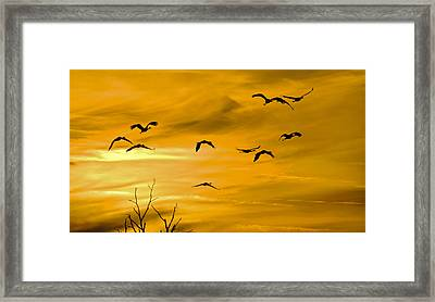 Framed Print featuring the photograph Sunset Fliers by Wanda Krack