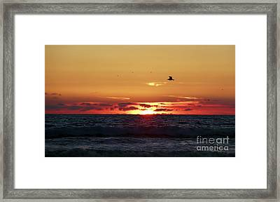Sunset Flight Framed Print by Nicki McManus