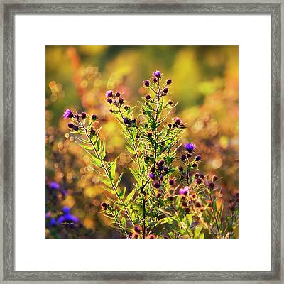 Framed Print featuring the photograph Sunset Flowers by Christina Rollo