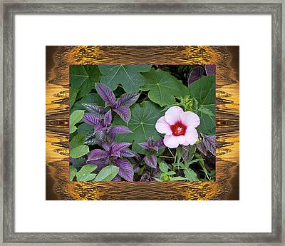 Sunset Foliage Framed Print by Bell And Todd