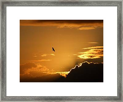 Sunset Glide Framed Print by Mark Alan Perry