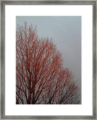 Sunset Glow - 1 Framed Print