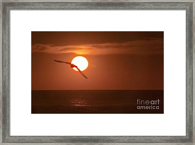 Sunset Gull No.1 Framed Print by Scott Evers