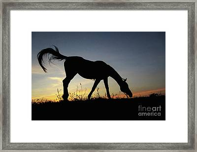 Sunset Horse Framed Print
