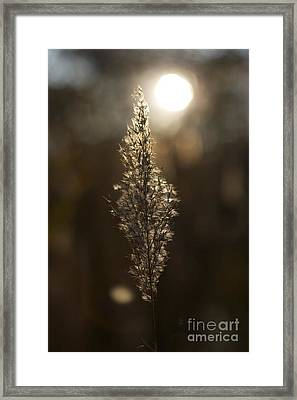 Sunset In Autumn Framed Print by Hideaki Sakurai