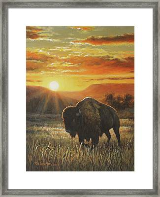 Sunset In Bison Country Framed Print by Kim Lockman