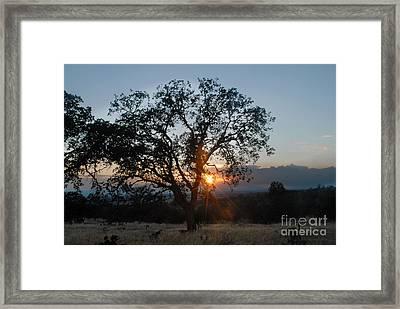 Sunset In Chico Framed Print by Richard Verkuyl