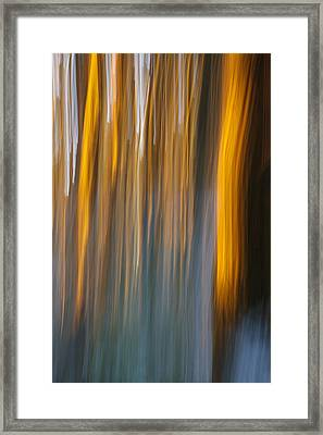 Sunset In Forest Framed Print by Davorin Mance
