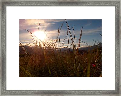 Sunset In Grass Framed Print by Sidsel Genee