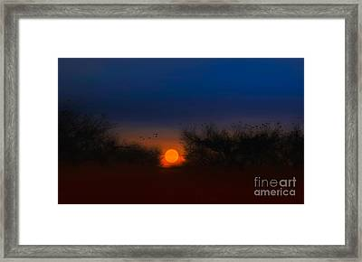 Sunset In The Apple Orchard Framed Print