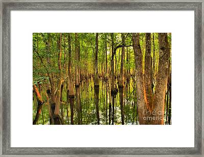 Sunset In The Florida Cypress Framed Print by Adam Jewell