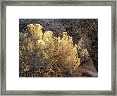 Sunset In The Rabbitbrush Lake Tahoe Sierra Nevada Larry Darnell Framed Print by Larry Darnell
