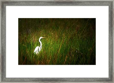 Sunset In The Sawgrass Framed Print