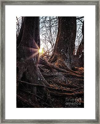Sunset In The Woods Framed Print