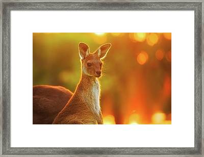 Framed Print featuring the photograph Sunset Joey, Yanchep National Park by Dave Catley