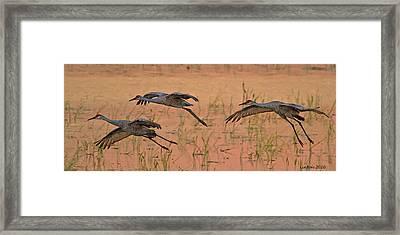 Sunset Landing Framed Print by Larry Linton
