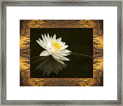 Sunset Lily Framed Print by Bell And Todd