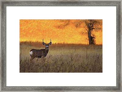 Sunset Lover Framed Print