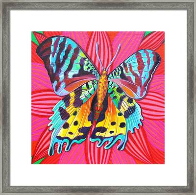 Sunset Moth Framed Print by Jane Tattersfield