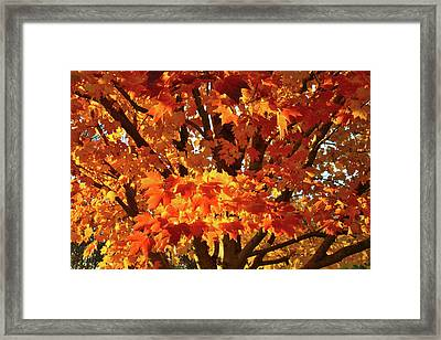 Framed Print featuring the photograph Sunset On Sugar Maple by Ray Mathis