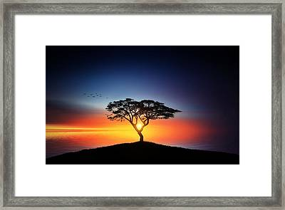 Sunset On The Tree Framed Print