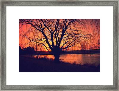 Sunset On Willow Pond Framed Print by Kathy M Krause