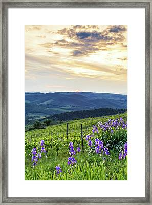 Sunset Over Chianti With Iris Framed Print