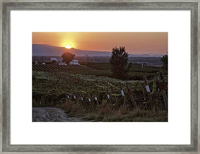 Sunset Over Colorado Vineyard Framed Print by Teri Virbickis