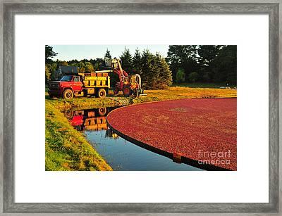 Sunset Over Cranberry Bog Framed Print