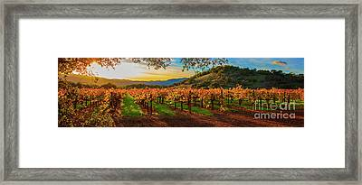 Sunset Over Gamble Vineyards Framed Print